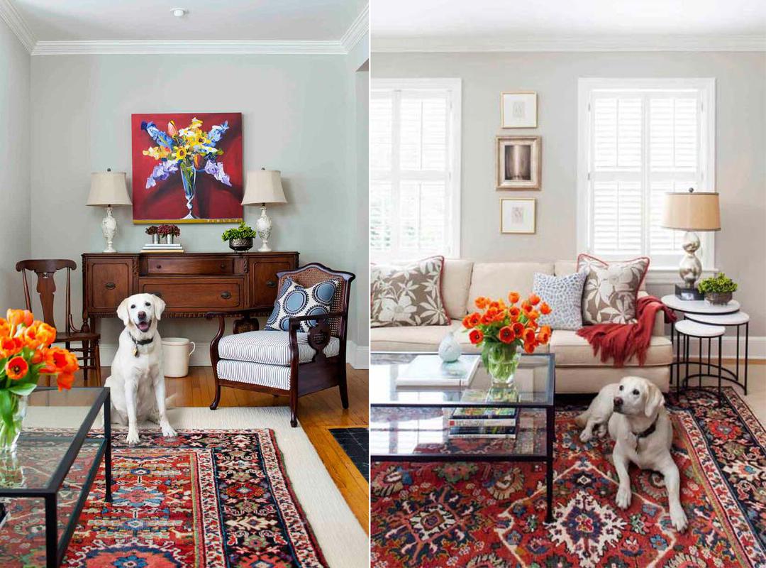 dog on persian rug